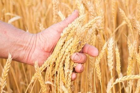 Государственный грант на развитие сельского хозяйства освобождение ндс