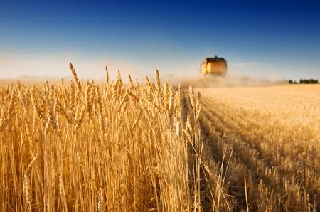 субсидирование сельского хозяйства